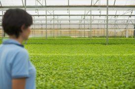 Semillero calidad Almeria Cristalplant