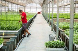 control calidad semillero almeria cristalplant